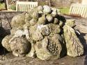 Pr. Stone Cornucopia - picture 3