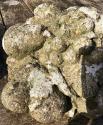 Pr. Stone Cornucopia - picture 6