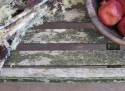 Neo-Classical Garden Bench - picture 5