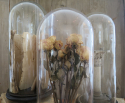 Collection of Glass Domes - picture 6